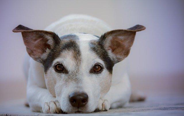 Civisme : chiens, aboiements, divagation