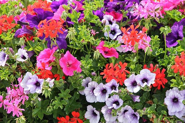 maisons fleuries - fleurs
